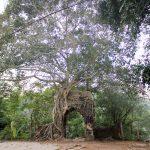 da bonsai