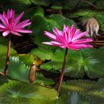 cay hoa sung