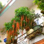 loc vung bonsai banc ong