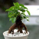 cây cho người mệnh mộc 1