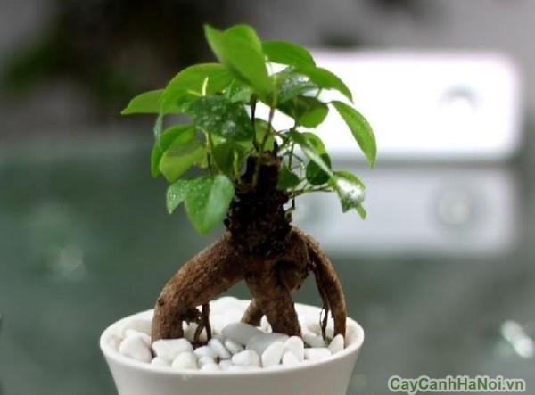 cây cho người mệnh mộc 5