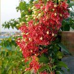 hoa giun 4