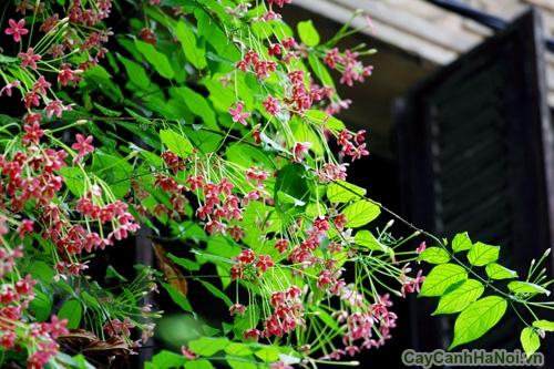 hoa giun 2