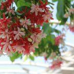 hoa giun 1