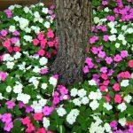 hoa ngọc thảo 2