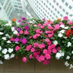hoa ngọc thảo 1