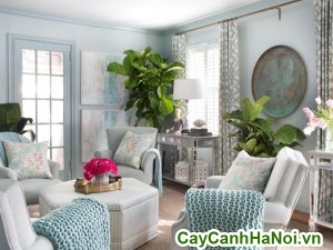 cây bàng sing trang trí nội thất