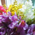 cây hoa lan nam phi