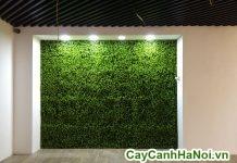 tường cây giả trang trí