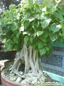 cây đa lâm vô