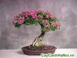 bông giấy bonsai