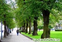 cây cảnh công viên