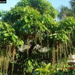 cây cây sân vườn