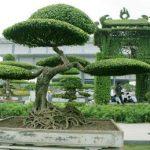 cây sanh tầng