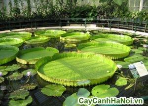 cây trồng thủy sinh