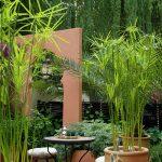 cây thủy trúc trang trí sân vườn hồ nước