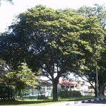 cây cảnh đường phố