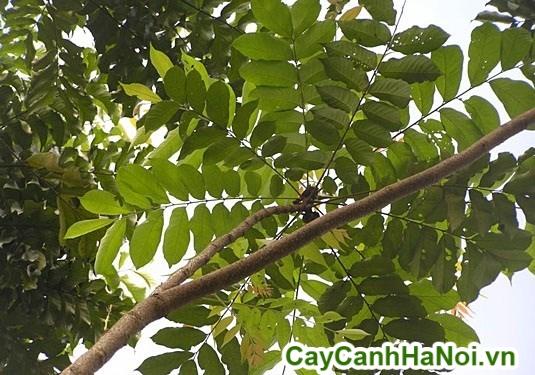 cây cảnh cho thuê