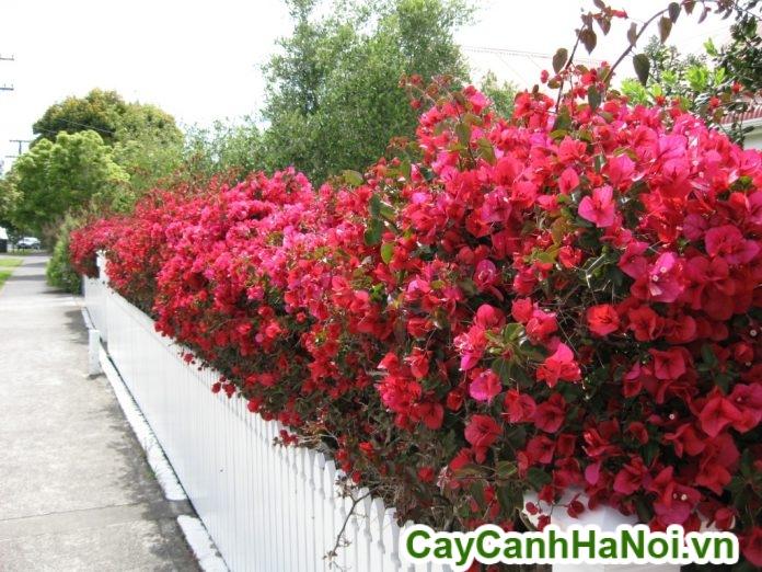 hoa giấy trang trí tường