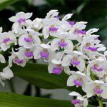 cách chăm sóc hoa lan