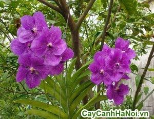 cách trồng hoa lan