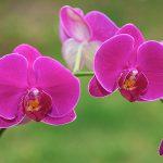 hoa lan đẹp