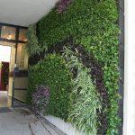 trồng cây xanh trên tường