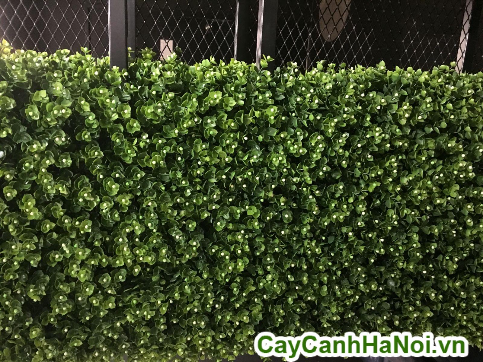 tường cây thật