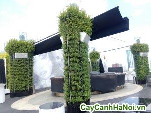 trồng cây xanh trên tường trang trí