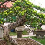 cây cảnh ngoại thất